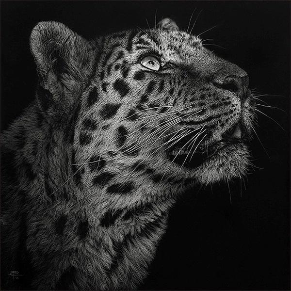 изображение леопарда