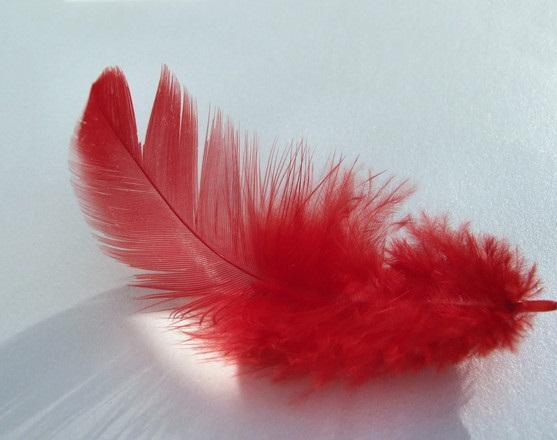 красное перышко