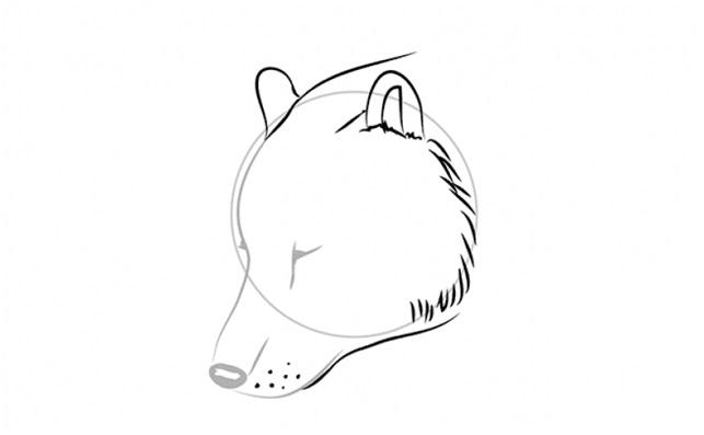 прорисовать уши