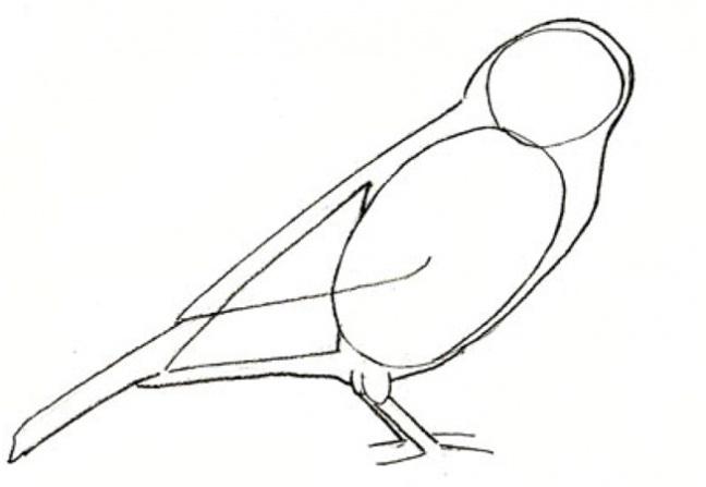 граница крыльев