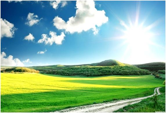 поле под солнцем