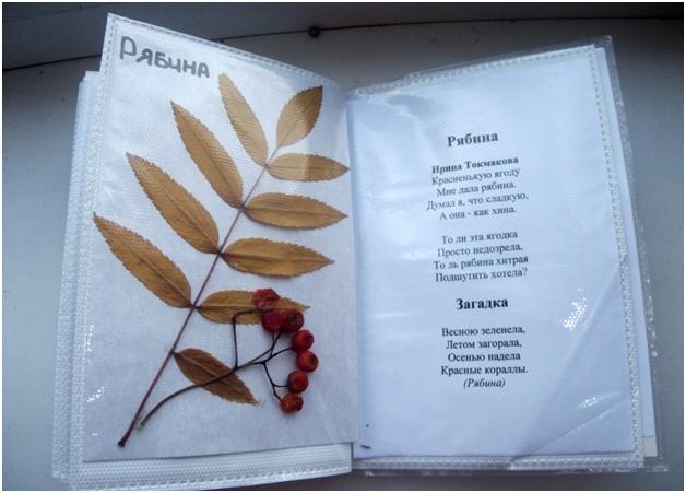 Альбом для гербария своими руками Современный Интернет Журнал