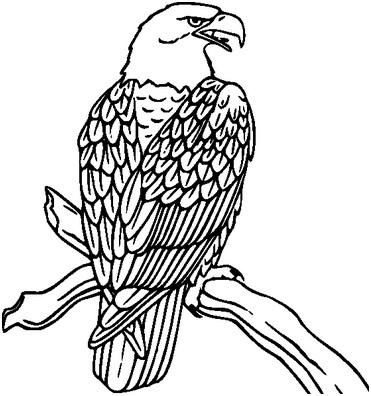 черно-белый орел