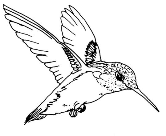 черно-белый зимородок