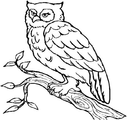 сова на ветке