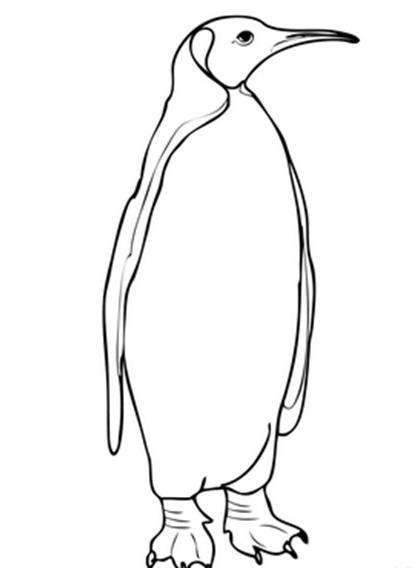 черно-белый пингвин