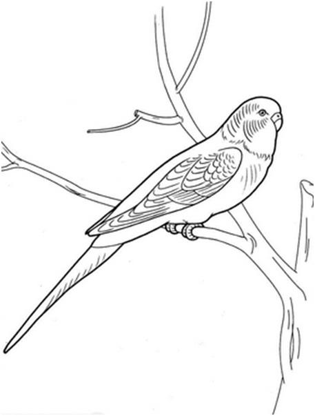попугай на ветке
