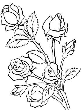 розы на стебле