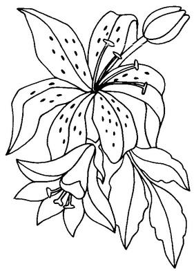 две лилии