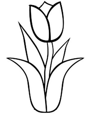 один тюльпан