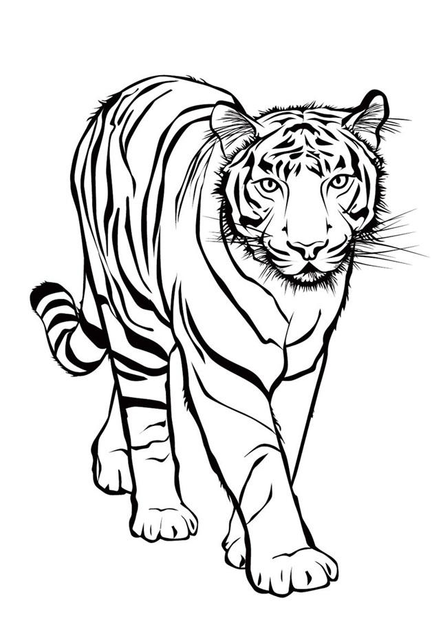 рисовать тигра