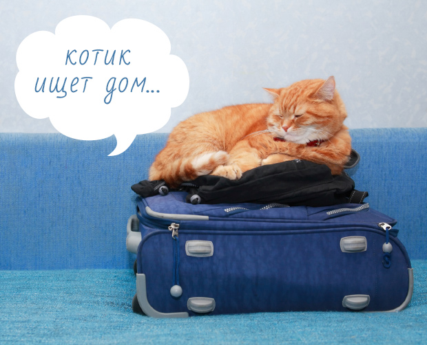 рыжий кот на чемодане