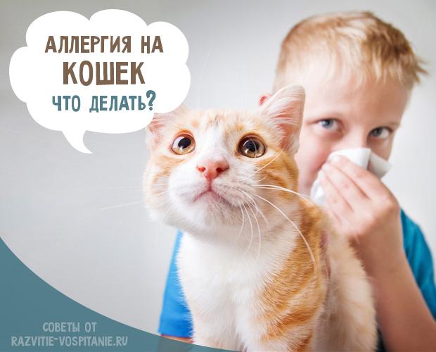 Аллергия на кошек у детей: симптомы и лечение